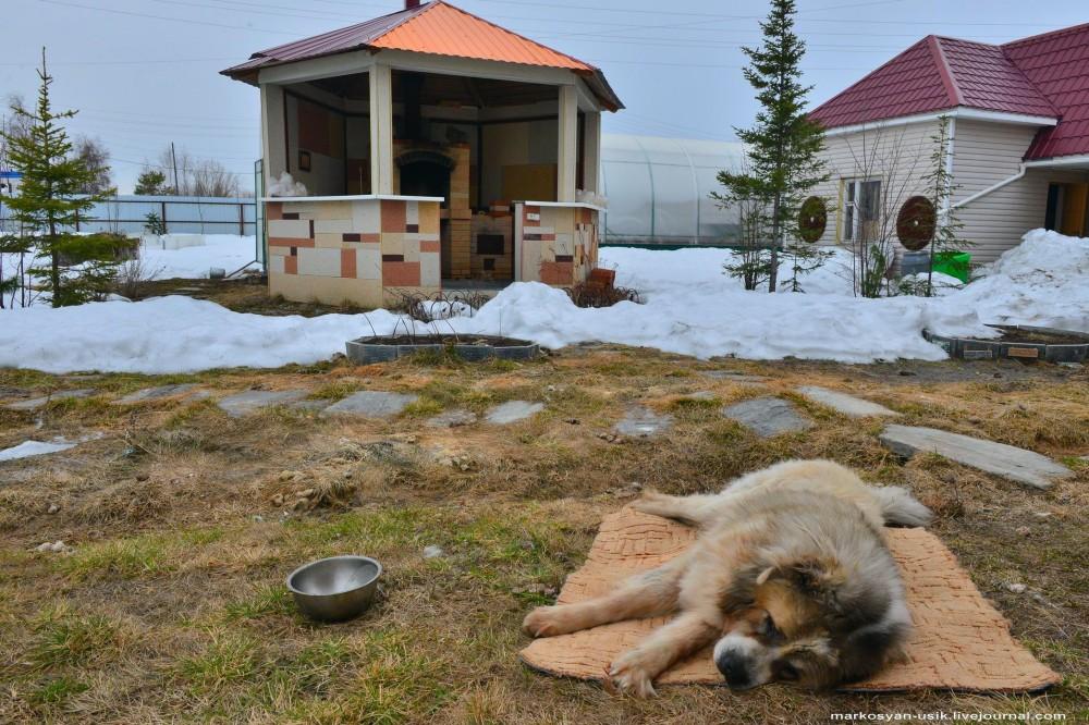 Собака Босс, фото Маркосян Усик-