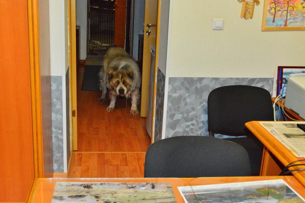 ...Собака Босс, фото Маркосян Усик