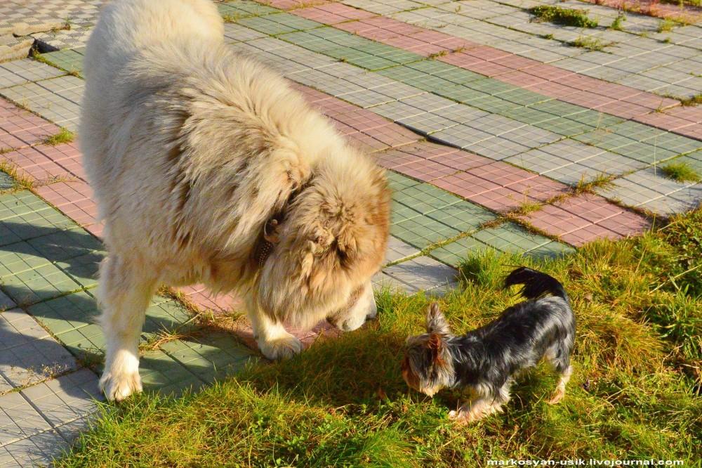 ..Собака Босс, фото Маркосян Усик