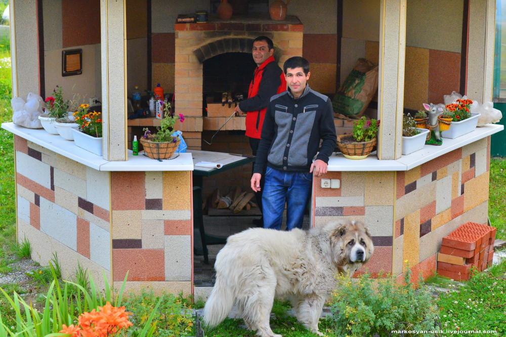 . Собака Босс, фото Маркосян Усик