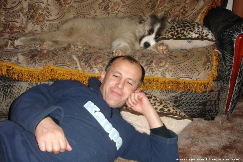 -=Собака Босс, фото Маркосян Усик