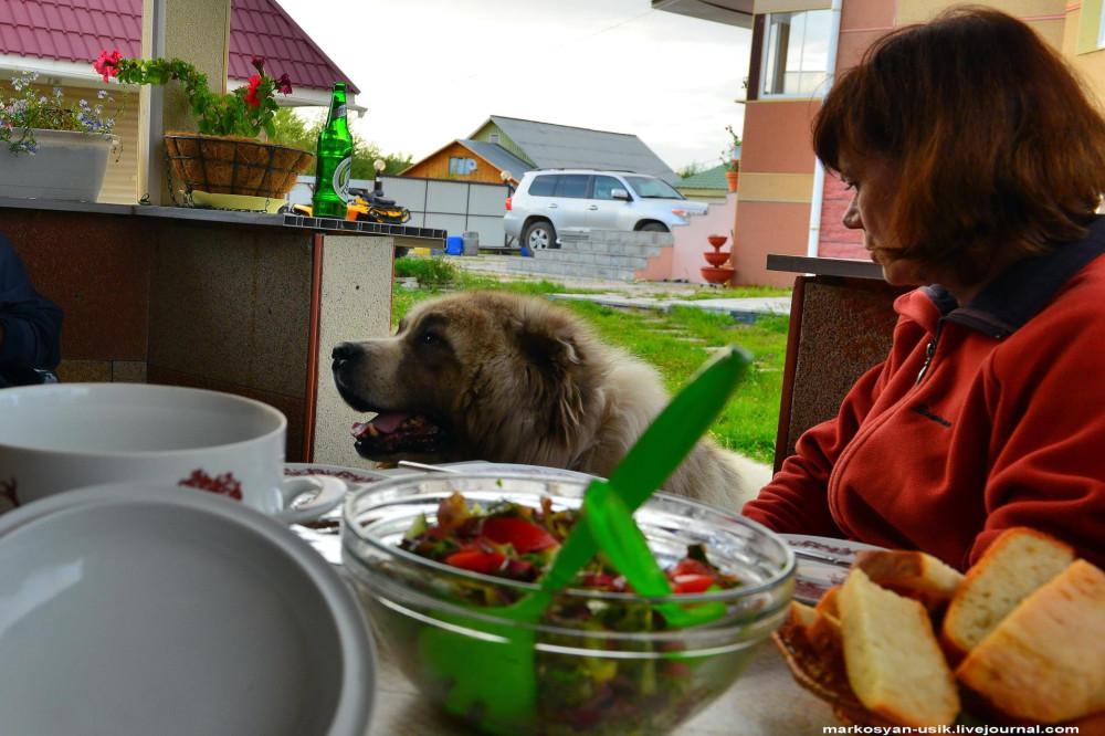 -=-Собака Босс, фото Маркосян Усик