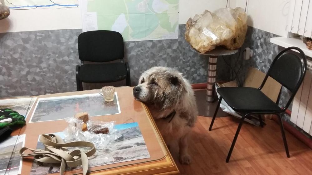 Собака Босс, фото Маркосян Усик .