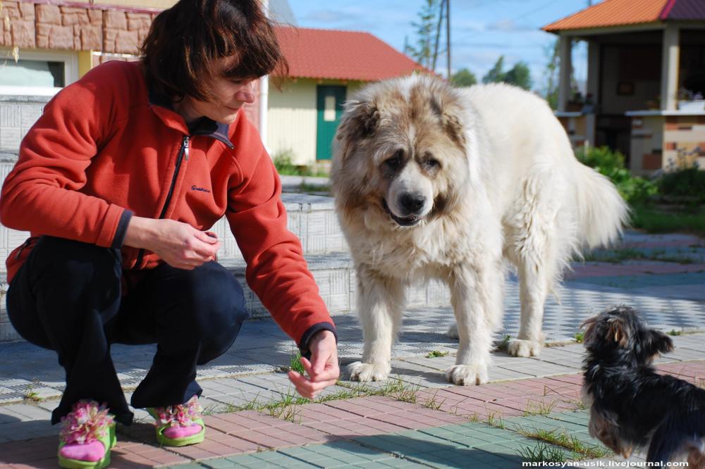 ...Собака Босс, фото Маркосян Усик ..