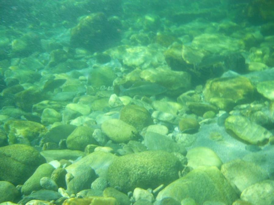 Вопрос .Сколько рыба в воде. 1_950x712