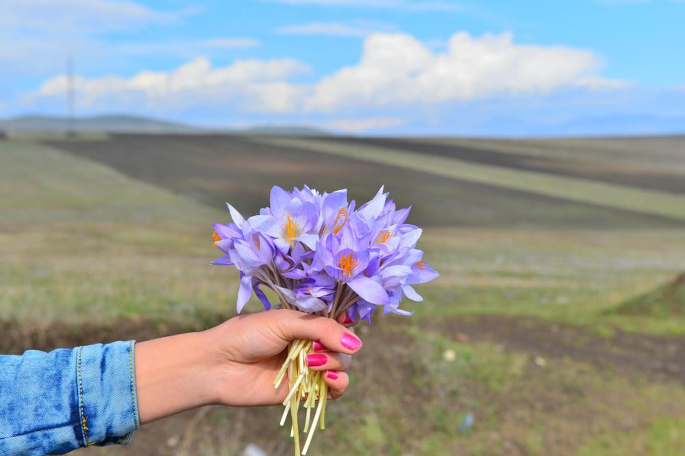 Армения цветок
