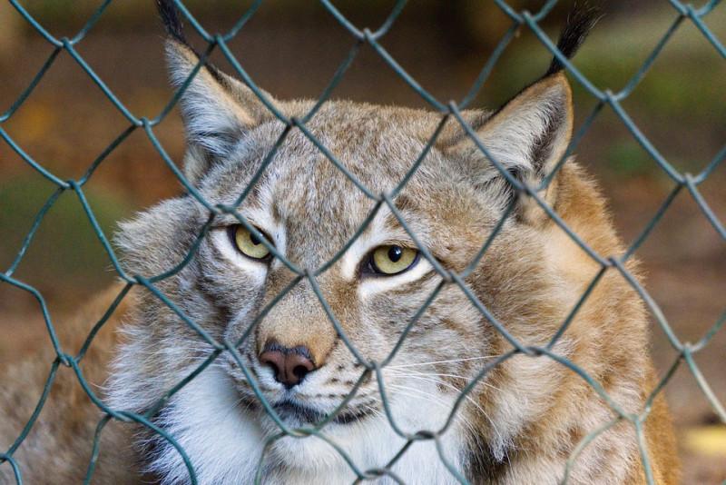 Выдумщица реальности зоозащитница