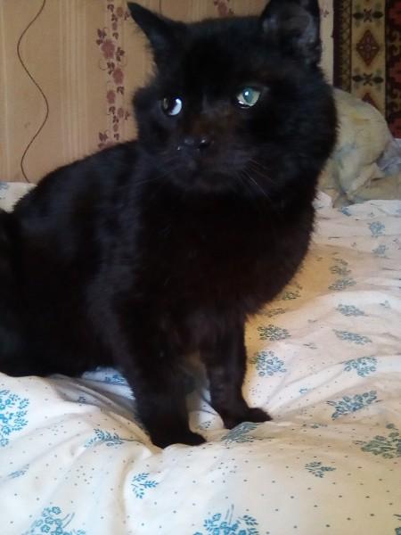 Выдумщица реальности кот Васька Кирпичный