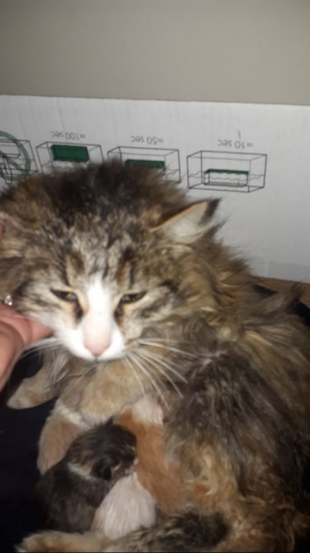 Выдумщица реальности кошка родила на улице Нефтекамск