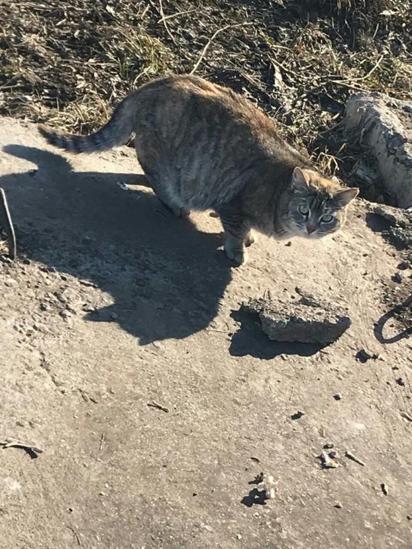 Выдумщица реальности кошка Нефтекамск в беде
