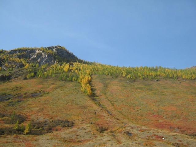 Алтай золотая осень