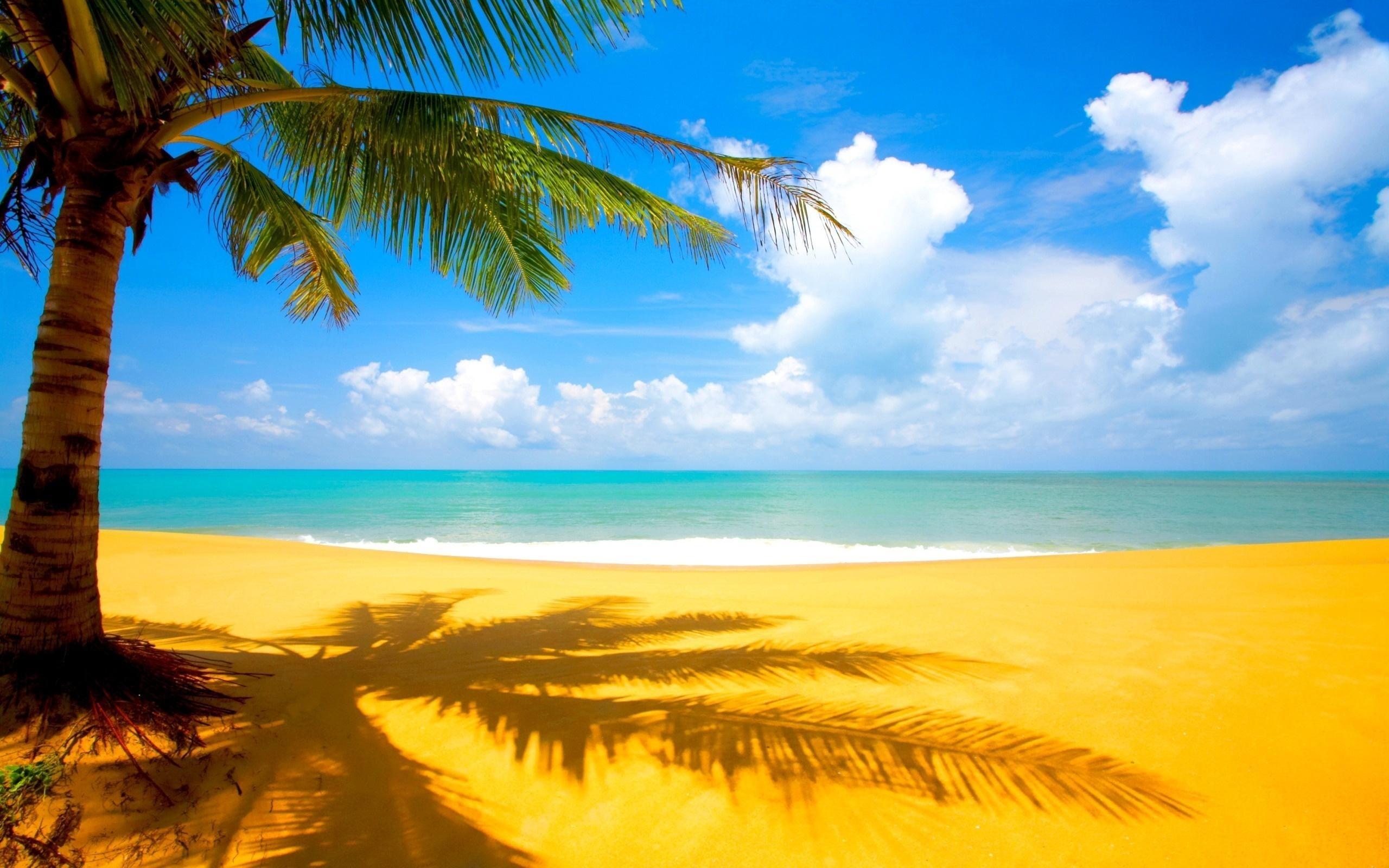 Море, солнце, пальмы