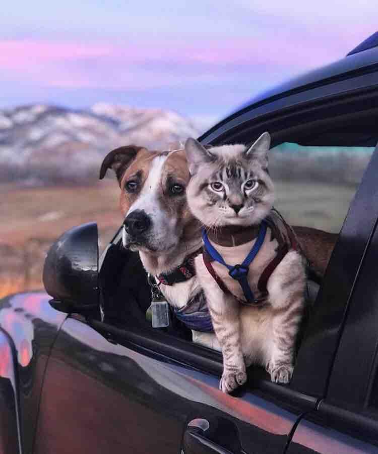 фото кота и пса путешествия мужики дороге
