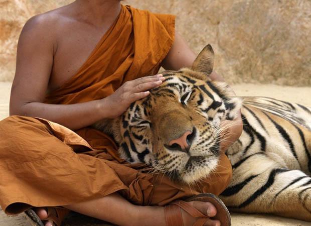 tigryoga