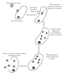 инфицирование клетки вирусом
