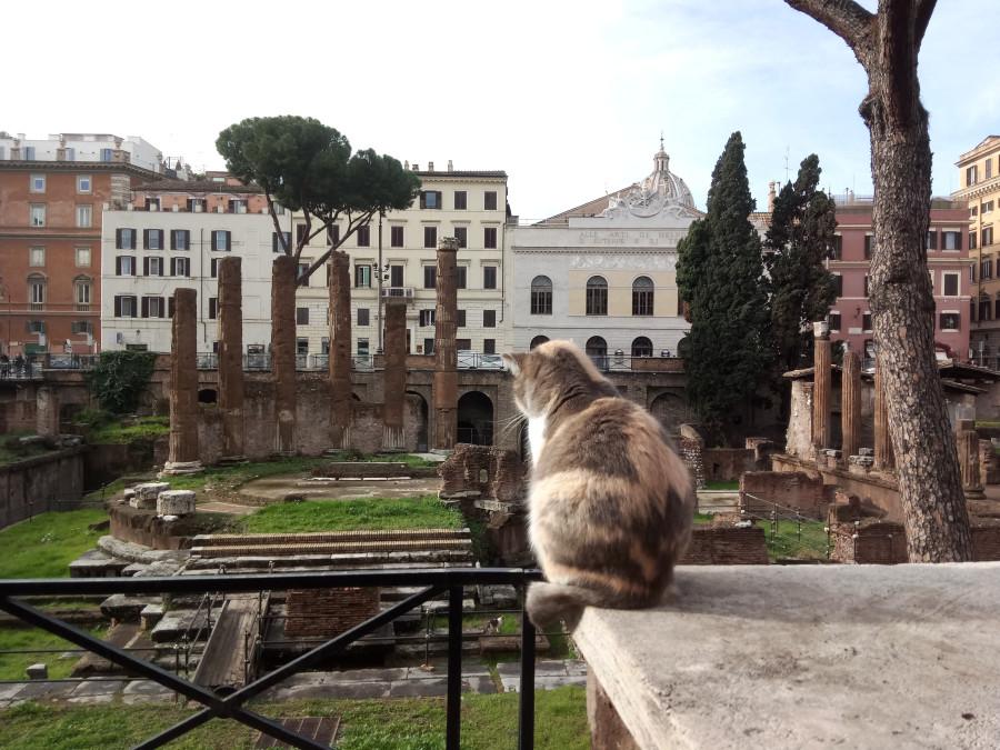 И снова коты с места убийства Цезаря