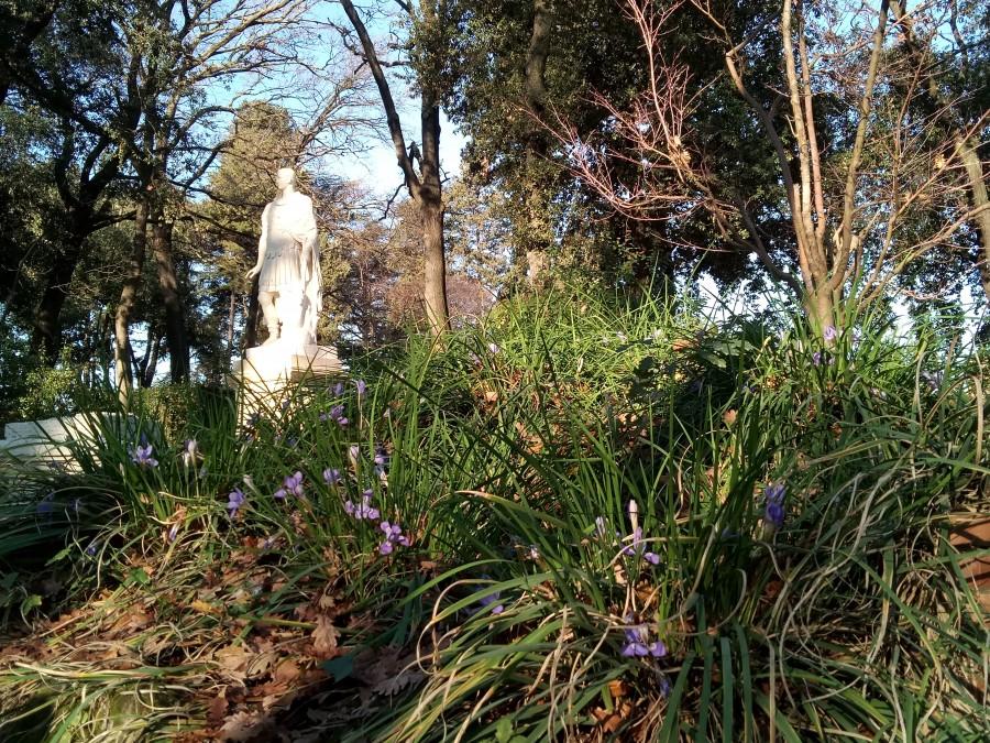 Зелени вам немного из садов Ватикана