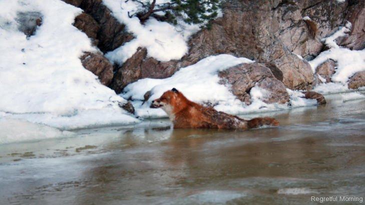 frozen-foxes-6