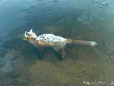 frozen-foxes-9