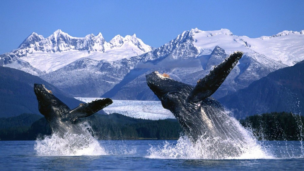 whalewatching01