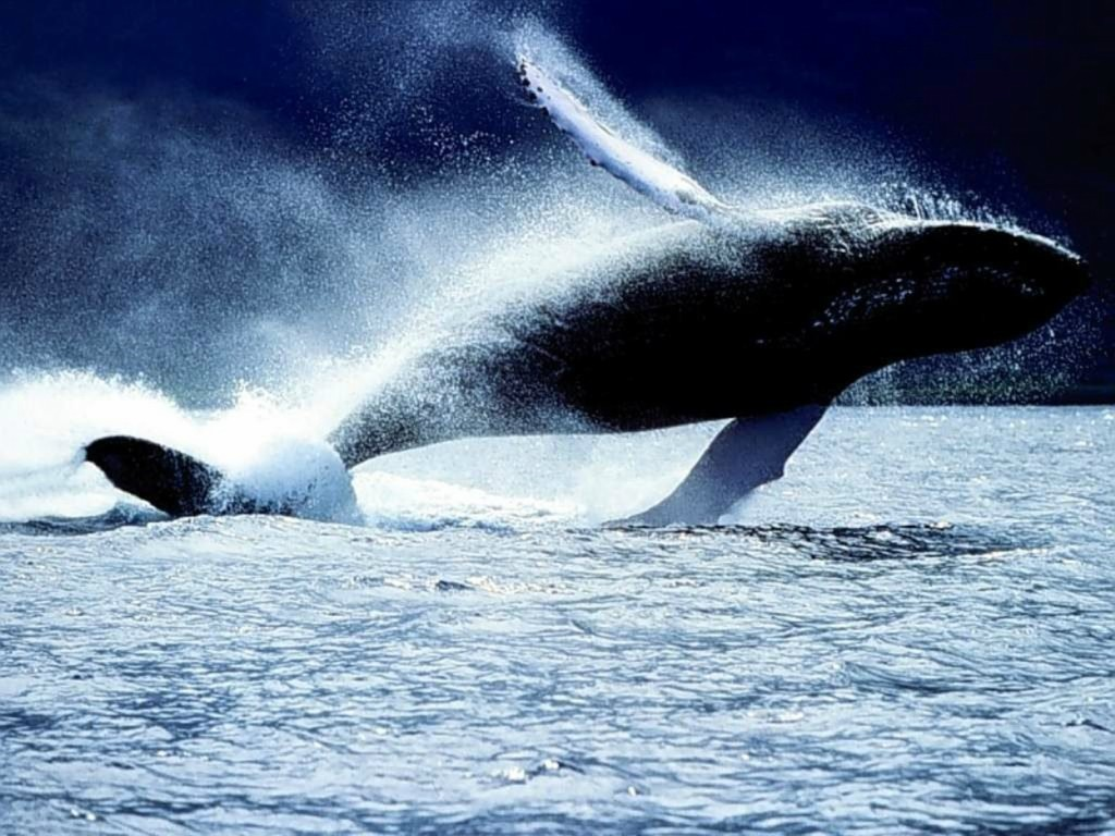 whalewatching02