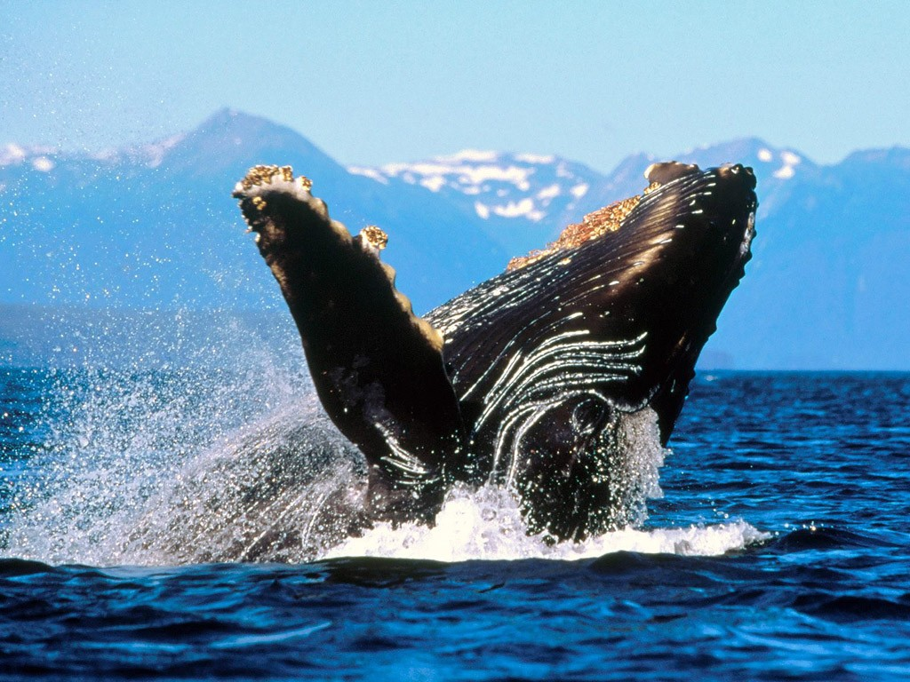 whalewatching04
