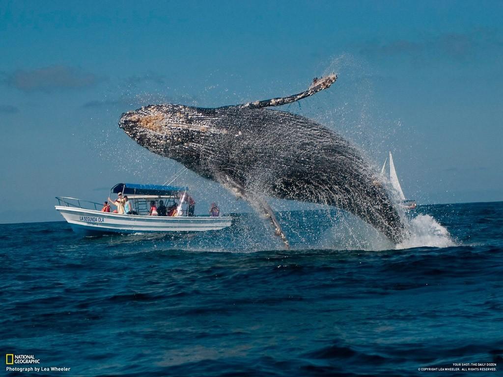whalewatching05