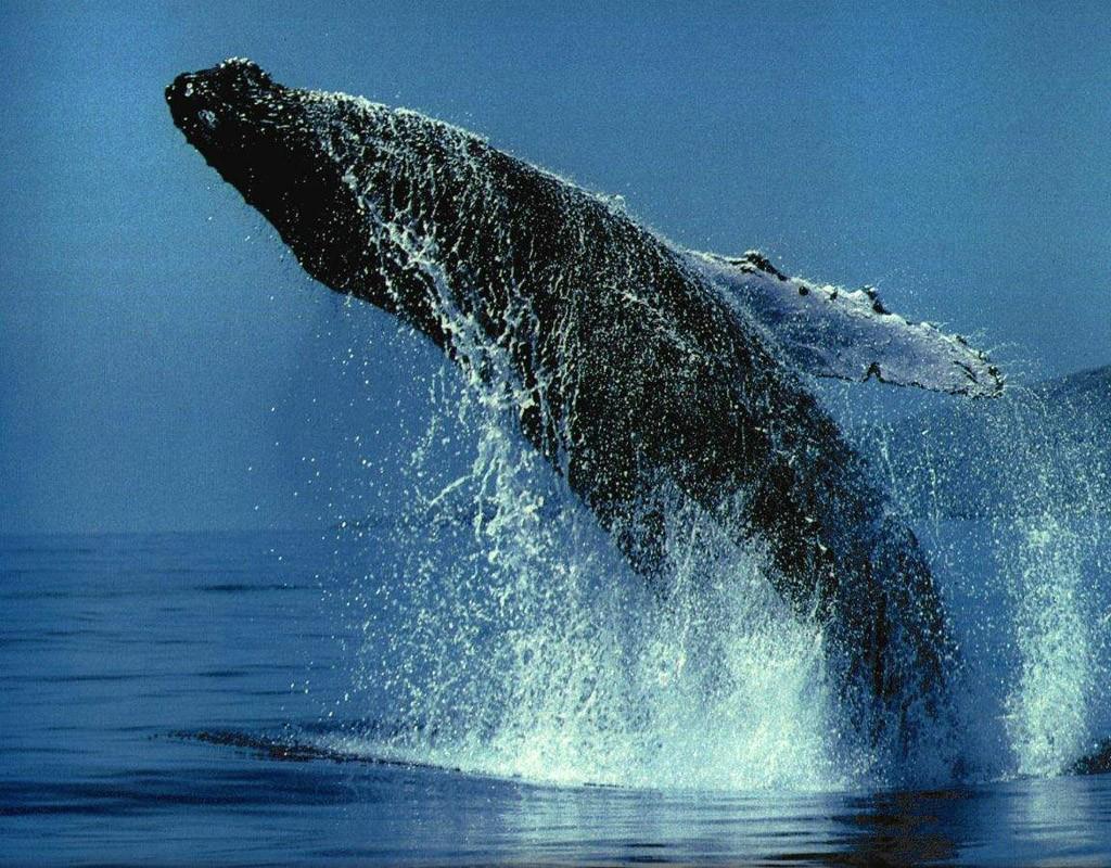 whalewatching06