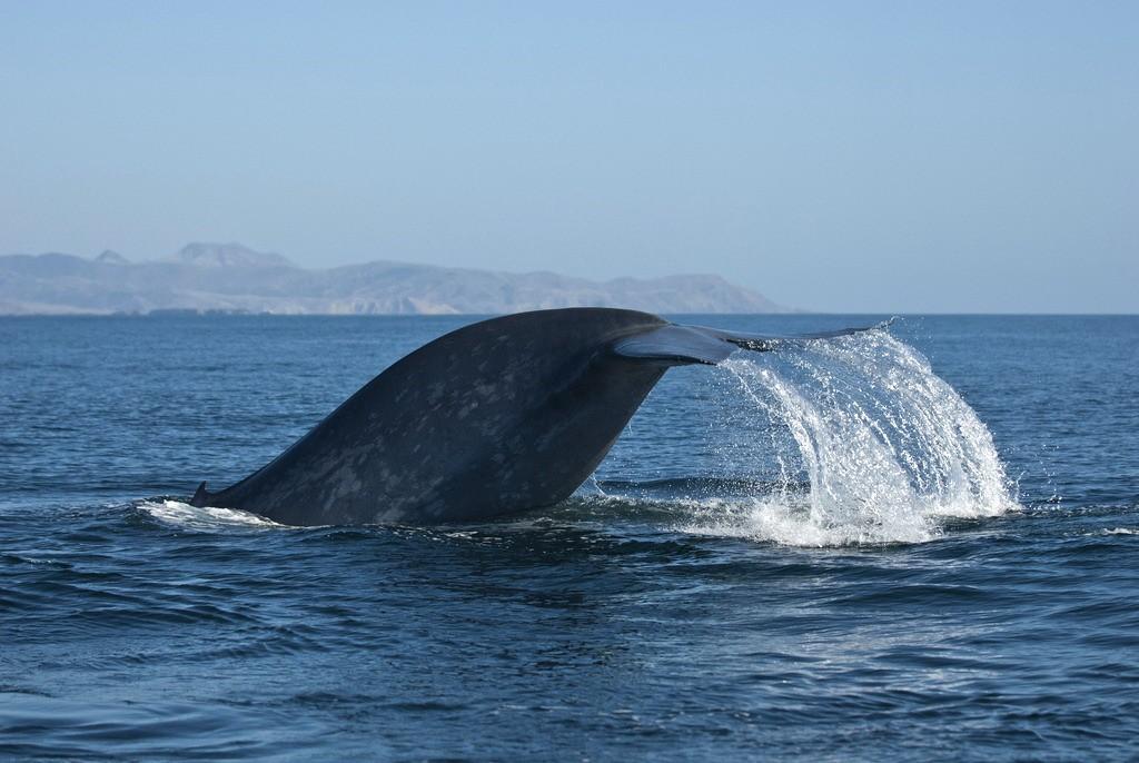whalewatching07