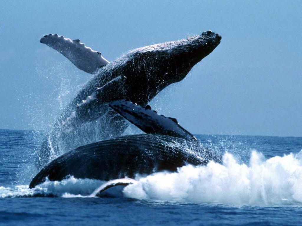 whalewatching08