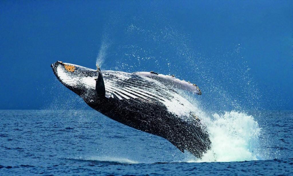 whalewatching09