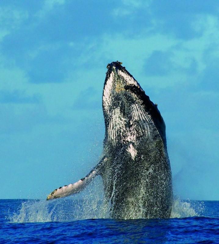 whalewatching10