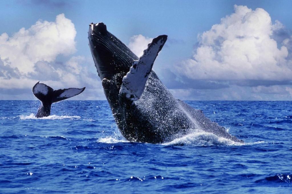 whalewatching14