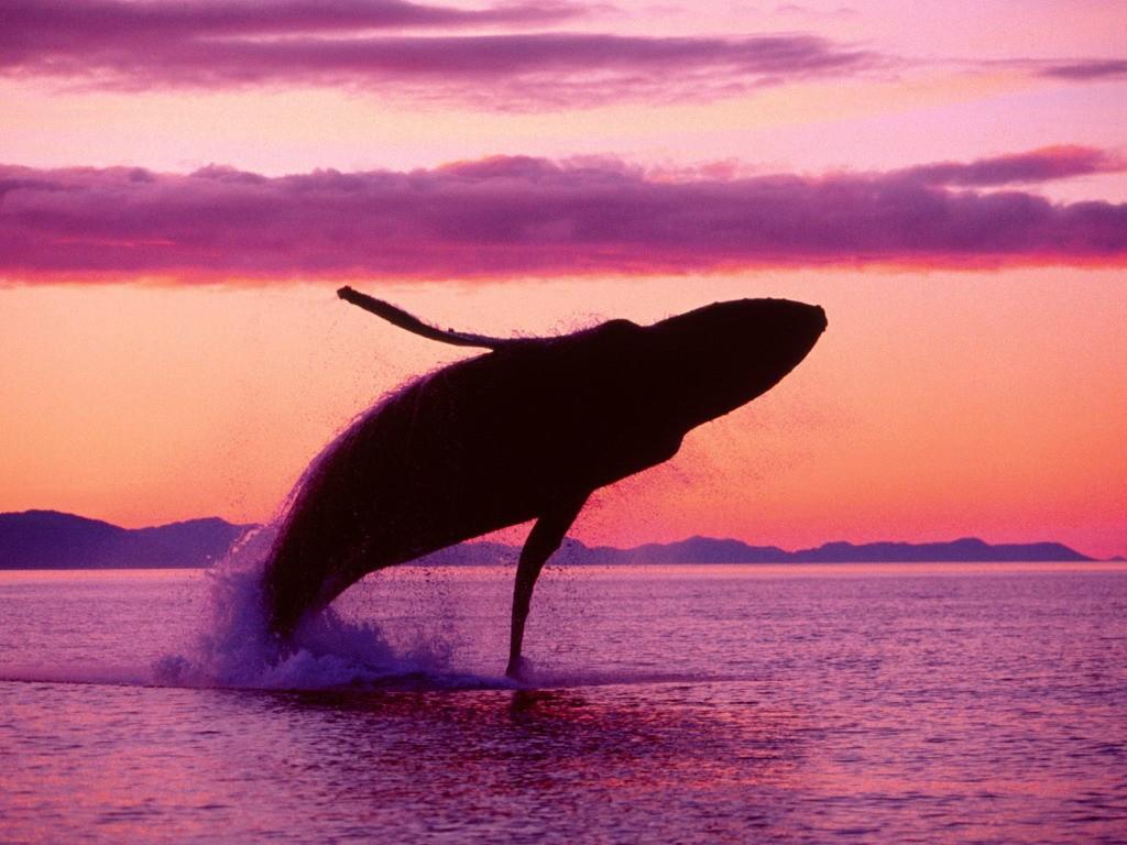 whalewatching15