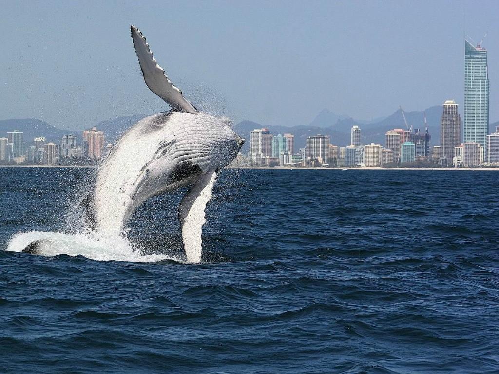 whalewatching16