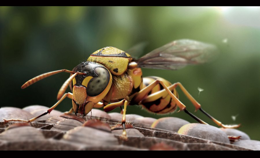 1this-little-creature-is-called-a-vespid1