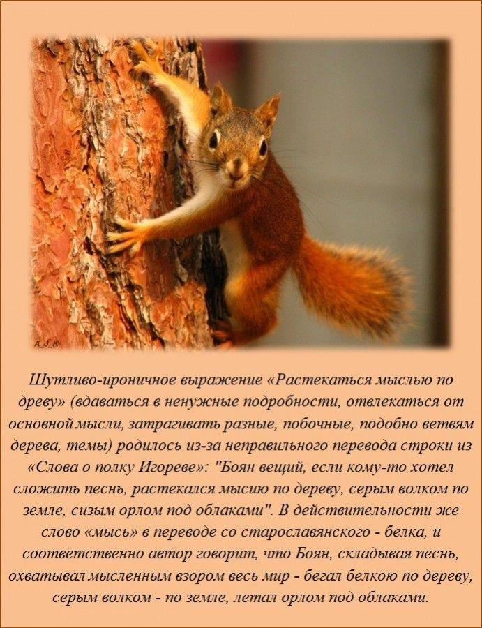 fact_19