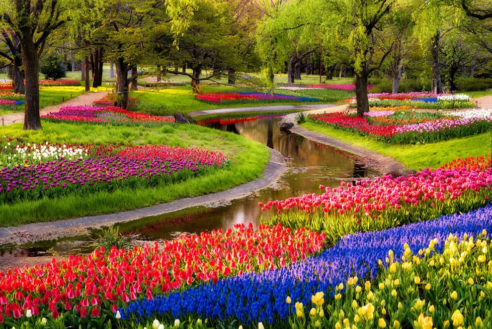 tulips30