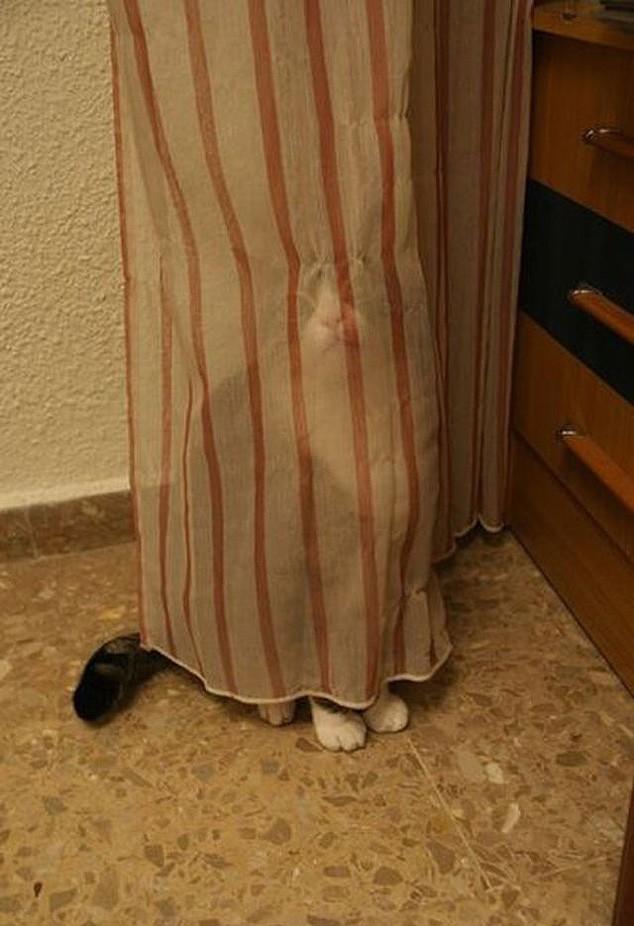 hidingcats01
