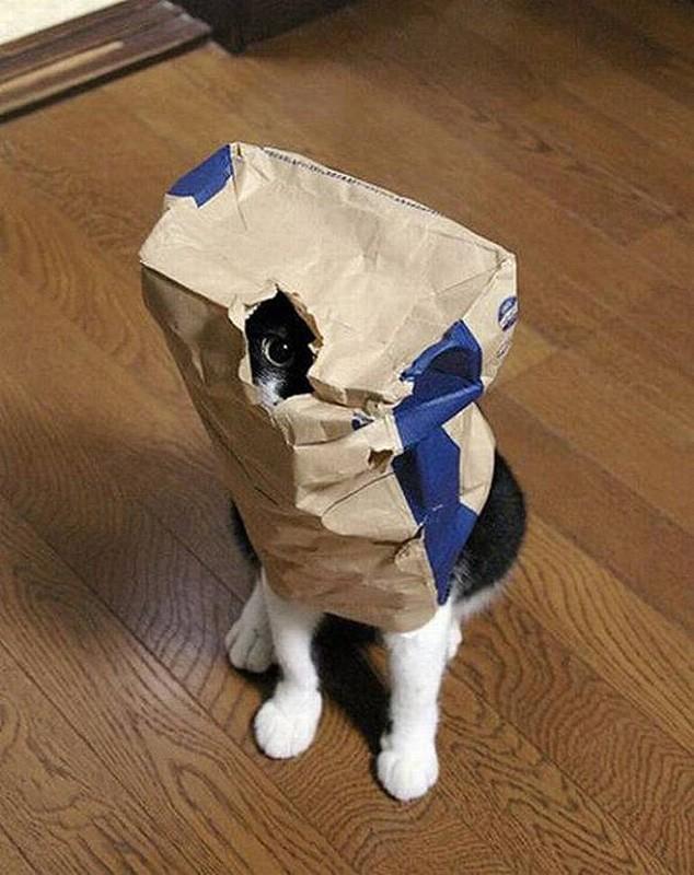 hidingcats05