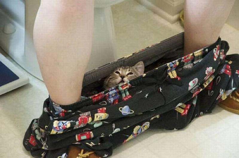hidingcats07