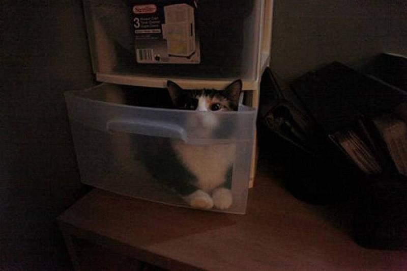 hidingcats08