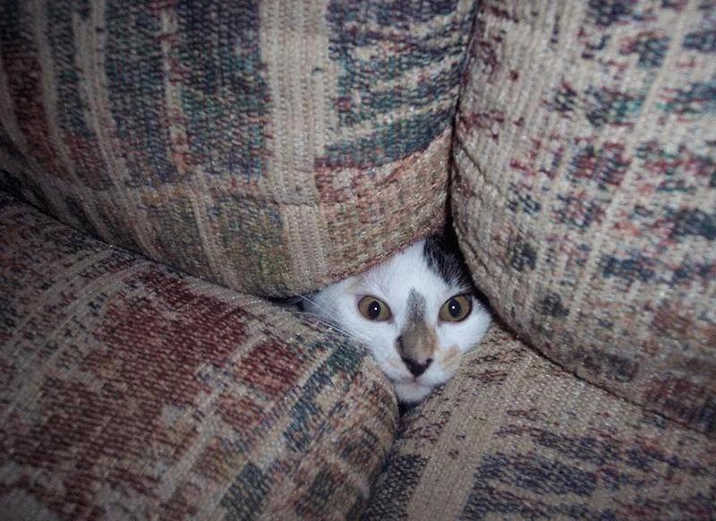 hidingcats12