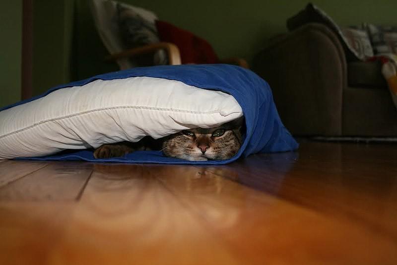 hidingcats14