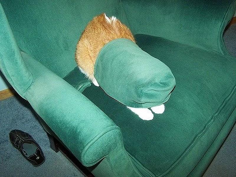 hidingcats15
