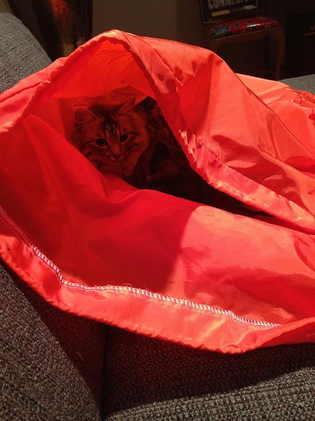 hidingcats18