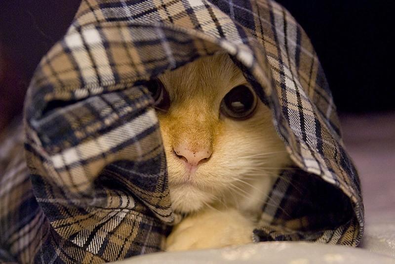 hidingcats20