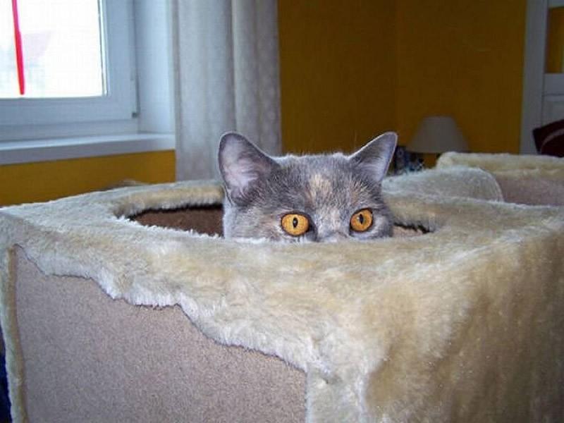 hidingcats21