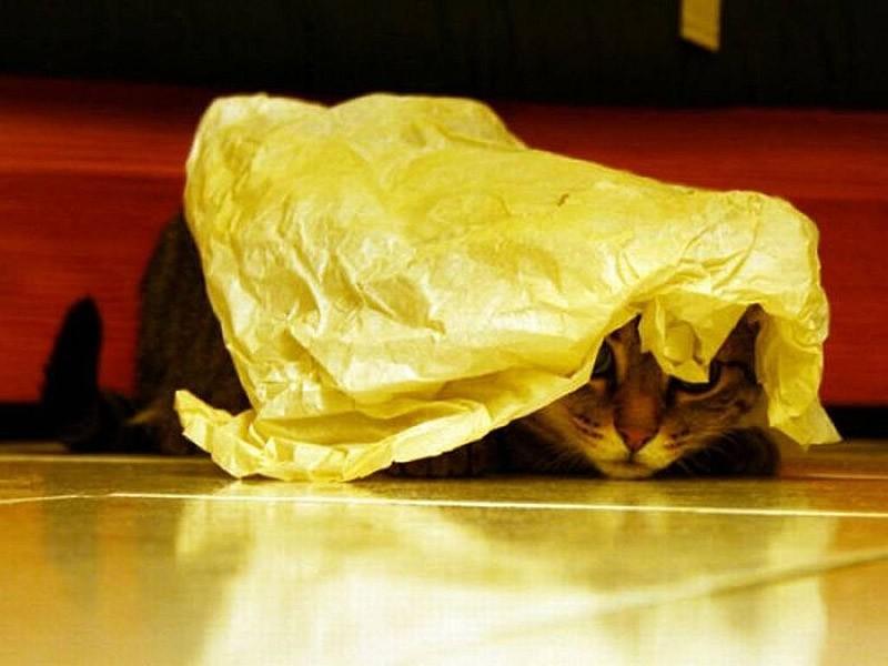 hidingcats22