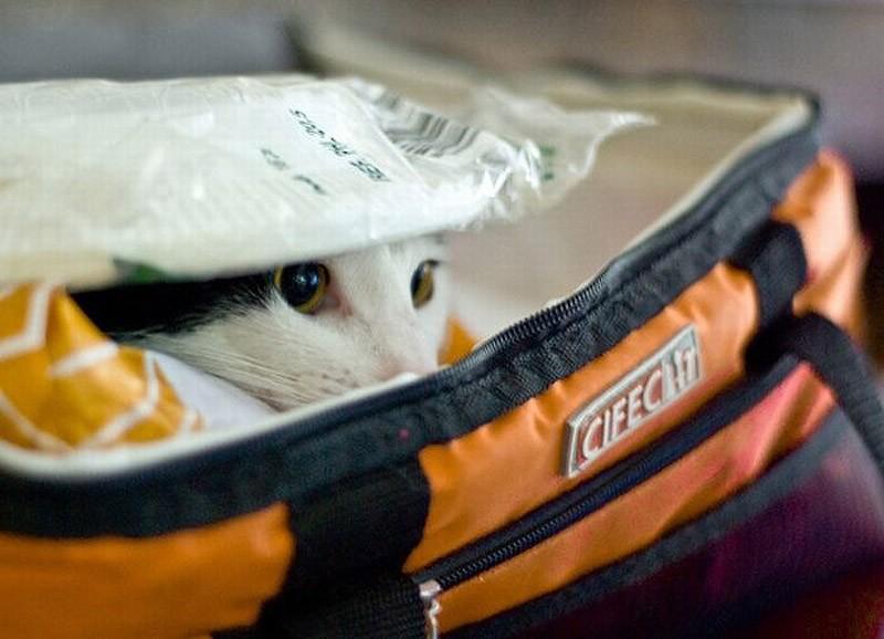 hidingcats23